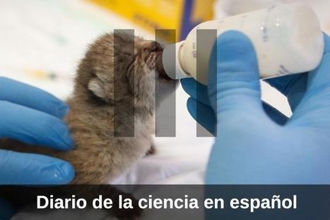 Materia III: La nueva web de noticias de ciencia | Educación a Distancia en Chile | Scoop.it