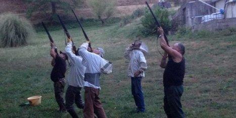 Des frelons asiatiques délogés au fusil en Dordogne   Agriculture en Dordogne   Scoop.it
