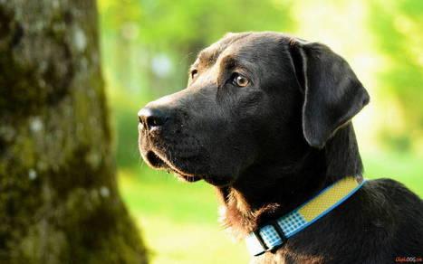 photo de chien   photodechien   Scoop.it