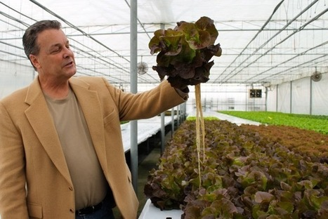 Hydroponics and new technology make winter vegetable production feasible for ... - RiverheadLOCAL | Aquaculture for Survival | Scoop.it