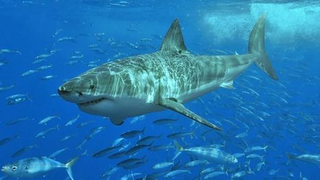 Why some conservationists take issue with 'Shark Week' | All about water, the oceans, environmental issues | Scoop.it