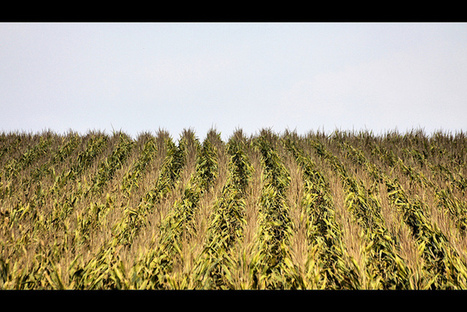 Biofuels Might Hold Back Progress Combating Climate Change | Sustain Our Earth | Scoop.it