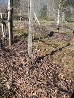 BRF vigne - Domaine de la Voie Blanche #nature vs. environnement | vin naturel | Scoop.it