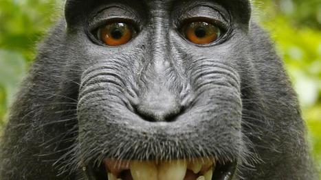 VS verleent geen auteursrecht aan selfie door aap   School   Scoop.it