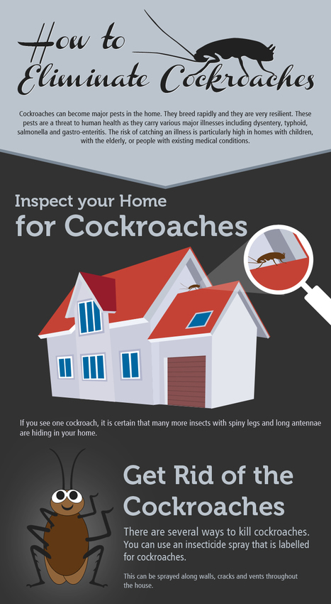 Building Inspections Brisbane   Building and Pest Inspections Brisbane   Scoop.it