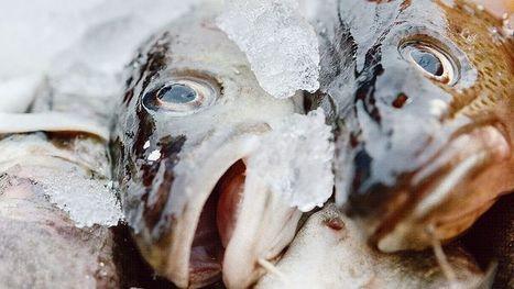 [Bilan] - Le saumon perd sa place de premier poisson consommé | Le flux d'Infogreen.lu | Scoop.it