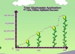 GMO Crop Pollution: The Threatening Implications of the 'Superweed' | SMART INNOVATIONS | Scoop.it