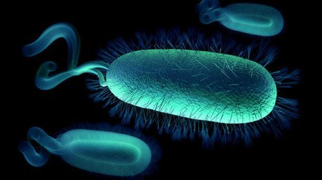 Anivax licences vaccine to tackle Campylobacter | FoodQualityNews.com | CALS in the News | Scoop.it