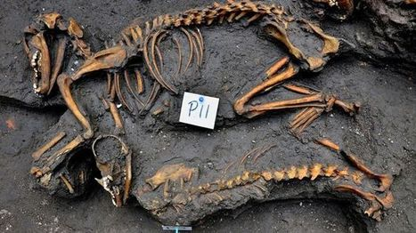 Archaeologists find ancient dog burial site under Mexico City apartment building - Fox News | Dogs | Scoop.it