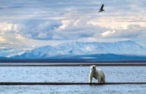 'Arctic Light' draws attention to global warming   GarryRogers Biosphere News   Scoop.it