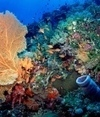 #Climatechange gets clocked ~ #TorchedTropics ! | Rescue our Ocean's & it's species from Man's Pollution! | Scoop.it
