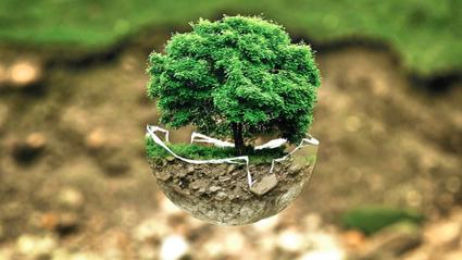Counting trees: 143 scientists just did   La parole de l'arbre   Scoop.it