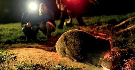 Australian Wildlife Tours Sydne | Boutique Tours | Scoop.it