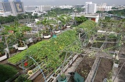 Younger Generations Embrace Urban Farming | Nourish The Planet | Vertical Farm - Food Factory | Scoop.it