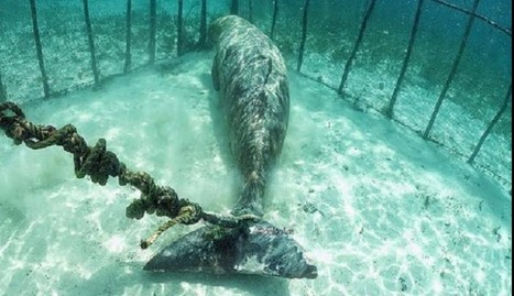 Divers Shocked To Find Animals Trapped In Cages Underwater | Nature Animals humankind | Scoop.it