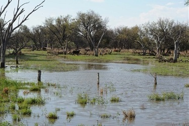 Farmers, graziers question 'marsh' status - The Land Newspaper   Ecosystems at risk   Scoop.it