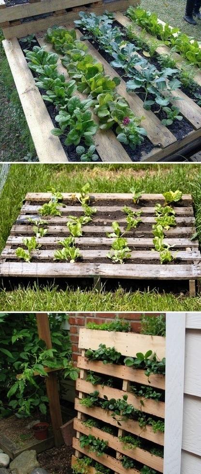 Using a pallet as a garden bed | Backyard Gardening | Scoop.it