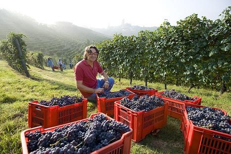 Barolo. The rich history of Italy's greatest #wine   Vitabella Wine Daily Gossip   Scoop.it