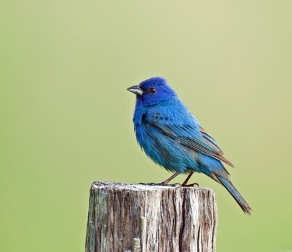 Cornell Launches Archive of 150,000 Bird Calls and Animal Sounds, with Recordings Going Back to 1929 | Navigate | Scoop.it