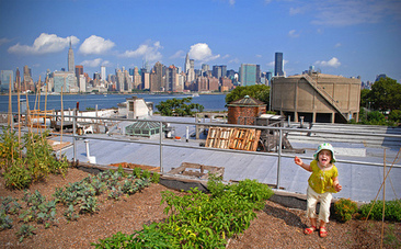How to Make Your Roof Green with Native Plants - Care2.com (blog) | GreenRoofs | Scoop.it