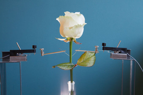 Scientists Create Color-Changing Cyborg Flowers | Creativity & Culture | Scoop.it