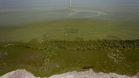 Behind Toledo's Water Crisis, a Long-Troubled Lake Erie   21st Century Living   Scoop.it