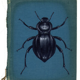 Rose Sanderson - Portfolio - Bugs on Book Covers | Book Cover Designs | Scoop.it
