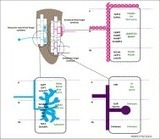 Nutrient transfer in plant–fungal symbioses | Plant Genomics | Scoop.it