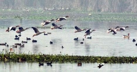 Early birds take flight as wetland slowly turns arid - The Hindu | Extreme Environments in the news | Scoop.it