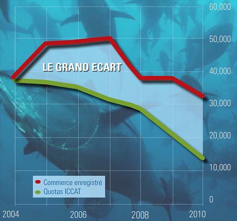 Le thon rouge de Méditerranée souffre plus que jamais de surpêche et de fraudes - notre-planete.info | S.V.T : l'Homme responsable de son environnement | Scoop.it