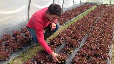 L'agriculture biologique a la cote en Wallonie | La Bio en question | Scoop.it