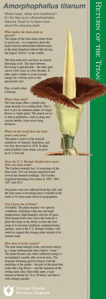 Return of the Titan   United States Botanic Garden   Agave genus   Scoop.it