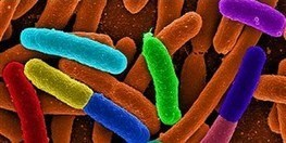 New Catalog of Human Gut Microbes | The Scientist Magazine® | Media Cultures: Microbiology in the news | Scoop.it