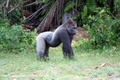 Non, le Gabon ne doit plus être un pays de cueillette! | Actualités Afrique | Scoop.it