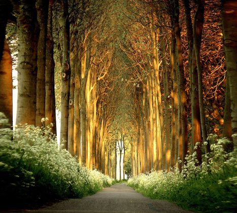 The Poetry of Nature in The Photography of Lars van de Goor | ФотоИнтервью | Music, Videos, Colours, Natural Health | Scoop.it