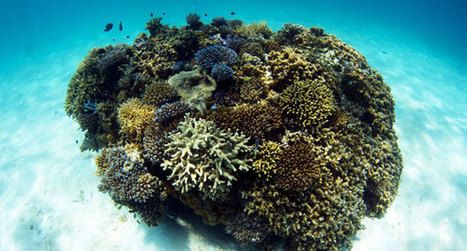 Back from the Dead: Remote Reef Recovers - Reefs.com | All about water, the oceans, environmental issues | Scoop.it