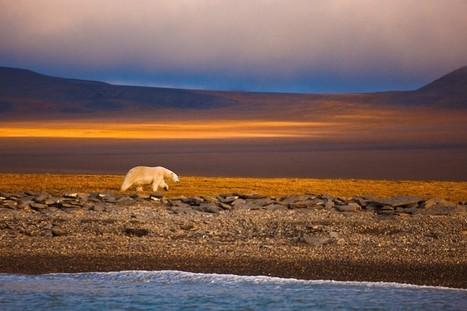 Viaggi in Canada, Alla ricerca degli orsi polari - Viaggiamente   Viaggi The Wilderness Society   Scoop.it