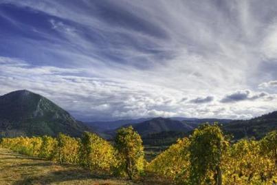 Des balades a la découverte des vignobles | Le Vin et + encore | Scoop.it
