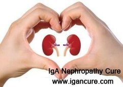 IgA Nephropathy: Can I Bring Back the Kidney into Function Normally_IGA Cure   igancure.com   Scoop.it