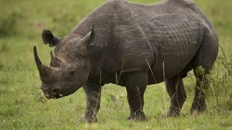 #Texas 'safari club' auctioning chance to kill #rhino in the name of conservation #idiots #green #extinction | Messenger for mother Earth | Scoop.it