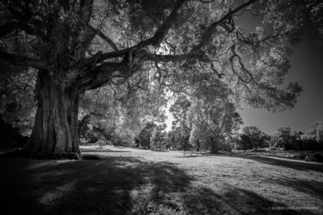 Infrared photography trials | Fujifilm X Series APS C sensor camera | Scoop.it