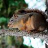 Snake Creek Wildlife Removal