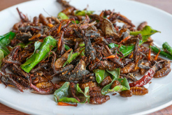 Insect snacks coming to Dutch supermarkets   EDIBLE INSECTS   Scoop.it