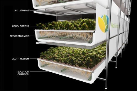 AeroFarms - An environmental champion, AeroFarms is leading the way to address our global food crisis by growing flavorful, healthy leafy greens in a sustainable and socially responsible way. | Business as an Agent of World Benefit | Scoop.it