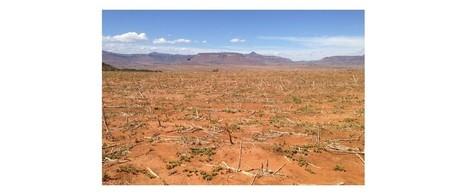 El Niño menace la vie de plus de 26 millions d'enfants | Développement durable et efficacité énergétique | Scoop.it