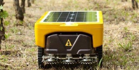 Pour le robot Vitirover, le temps des vendanges est arrivé | Agriculture durable et protection des cultures | Scoop.it