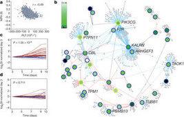 I geni delle piastrine | Med News | Scoop.it