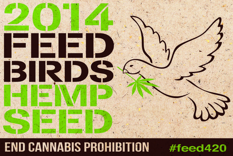 Feed The Birds Campaign - sowing hemp seeds across the UK to end draconian drug laws | Drugs, Society, Human Rights & Justice | Scoop.it
