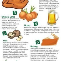 8 Thanksgiving Day Foods That Can Kill your Dog | Visual.ly | All Things Dog | Scoop.it