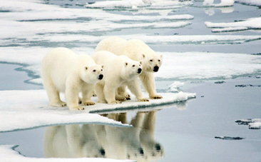 This Polar Bear Video is as Heartbreaking as it is Amazing | Nature Animals humankind | Scoop.it